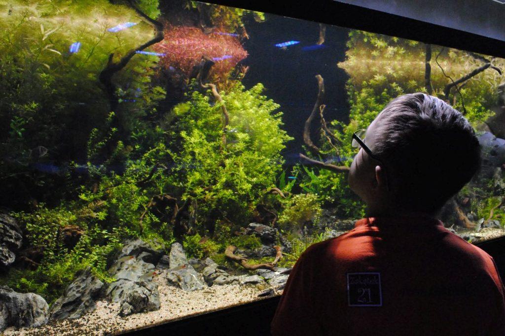 dzieci oglądają ryby
